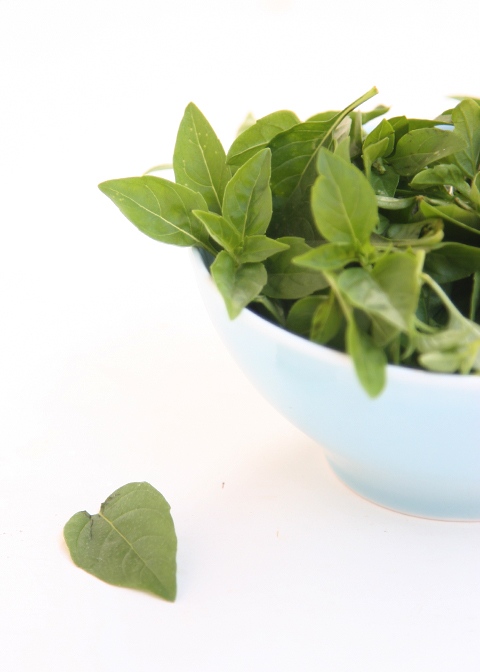 Preserving Basil - Leaves